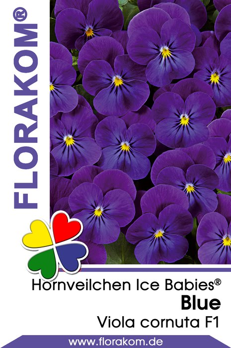 hornveilchensamen ice babies blue florakom. Black Bedroom Furniture Sets. Home Design Ideas