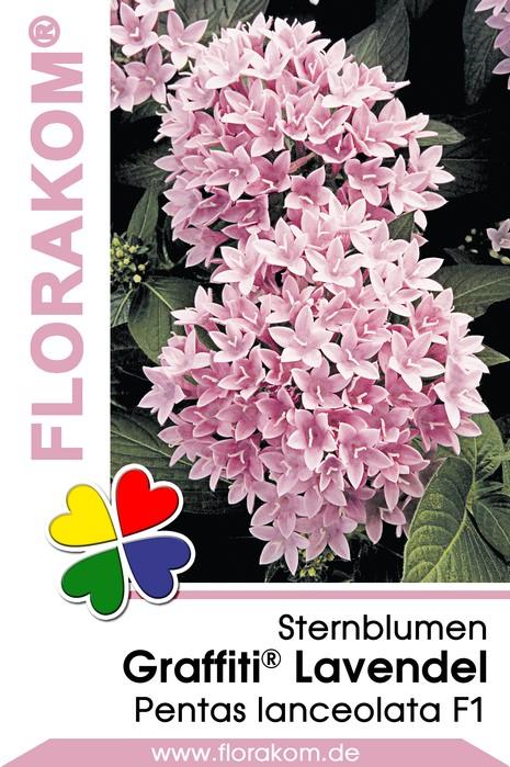 Sternblumensamen pentas graffiti lavendel florakom - Lavendel zimmerpflanze ...