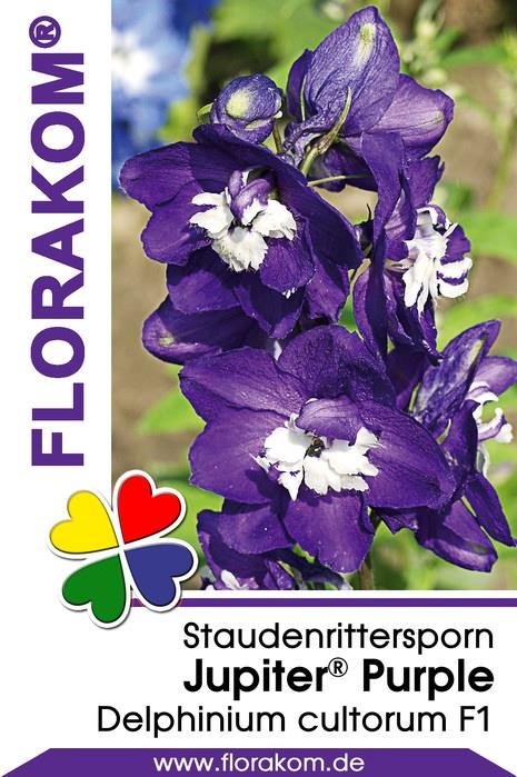 ritterspornsamen jupiter purple florakom. Black Bedroom Furniture Sets. Home Design Ideas