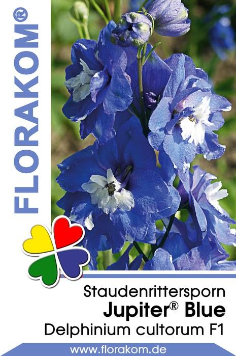 ritterspornsamen jupiter blue florakom. Black Bedroom Furniture Sets. Home Design Ideas