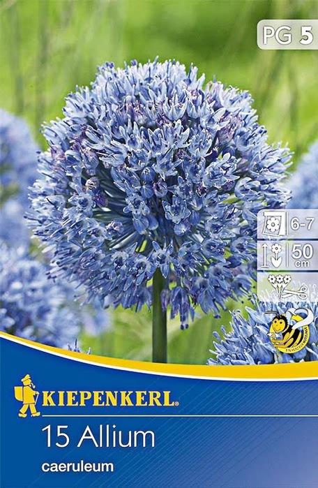 15 zierlauchzwiebeln azurblau florakom. Black Bedroom Furniture Sets. Home Design Ideas