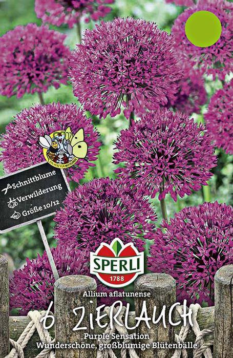 6 zierlauchzwiebeln purple sensation florakom. Black Bedroom Furniture Sets. Home Design Ideas