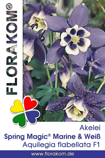 <hr>Akelei Spring Magic® Marine &amp; Weiß <hr>Samen<hr>