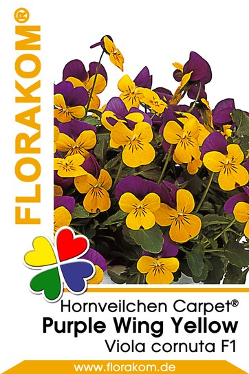 hornveilchensamen carpet purple wing yellow florakom. Black Bedroom Furniture Sets. Home Design Ideas
