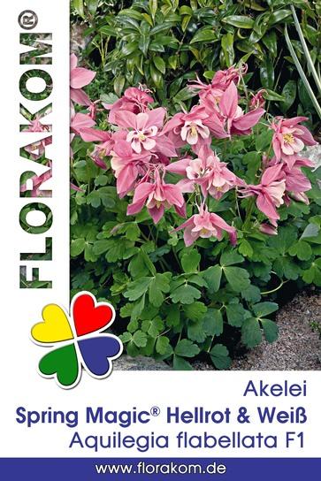 <hr>Akelei Spring Magic® Hellrot &amp; Weiß <hr>Samen<hr>
