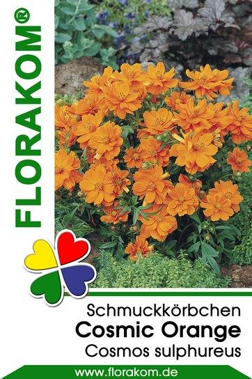 schmuckk rbchensamen cosmic orange kosmeen florakom. Black Bedroom Furniture Sets. Home Design Ideas