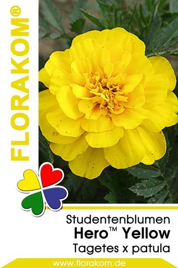 studentenblumen hero yellow tagetes florakom. Black Bedroom Furniture Sets. Home Design Ideas