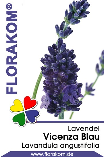 <hr>Lavendel Vizenca Blau <hr>Samen<hr>