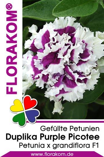 petuniensamen duplika purple picotee florakom. Black Bedroom Furniture Sets. Home Design Ideas