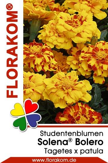 studentenblumen tagetes solena bolero florakom. Black Bedroom Furniture Sets. Home Design Ideas