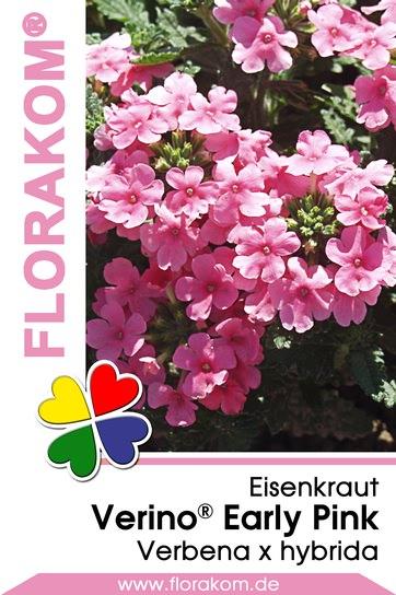 eisenkrautsamen verino early pink florakom. Black Bedroom Furniture Sets. Home Design Ideas