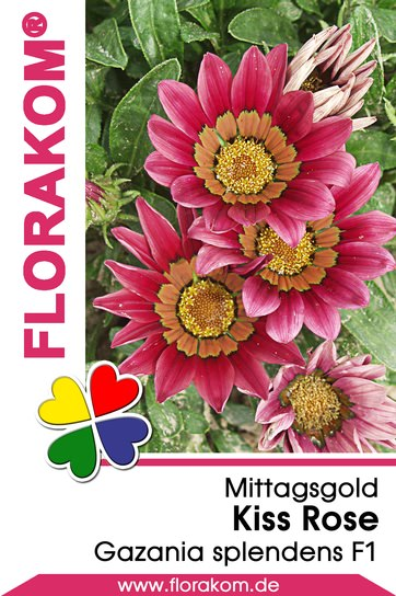Mittagsgold Kiss Rose - Gazanien