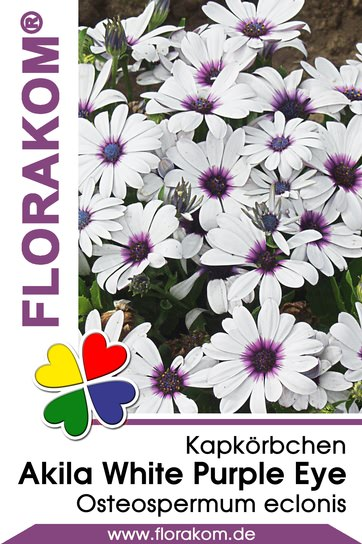 Kapkörbchen Akila White with Purple Eye