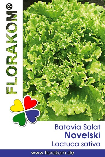 <hr>Bataviasalat Novelski <hr>Samen<hr>