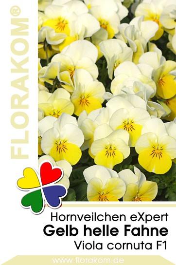 Hornveilchen eXpert Gelb mit heller Fahne