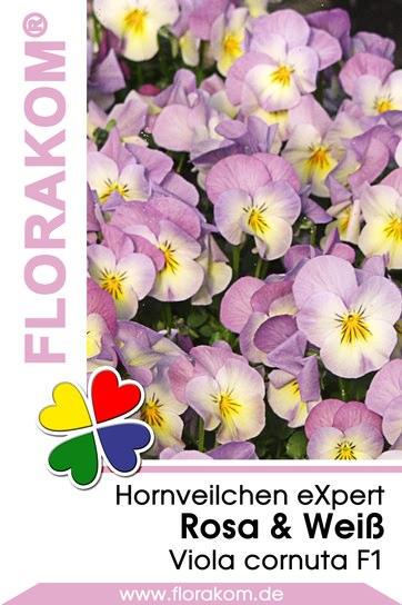 Hornveilchen eXpert Rosa & Weiß