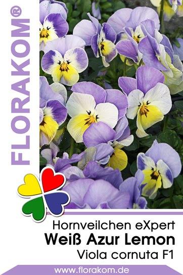 Hornveilchen eXpert Tricolor Weiß - Azur - Lemon