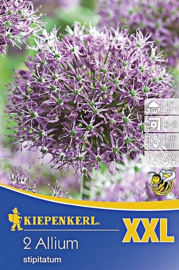 2 zierlauchzwiebeln violett xxl florakom. Black Bedroom Furniture Sets. Home Design Ideas