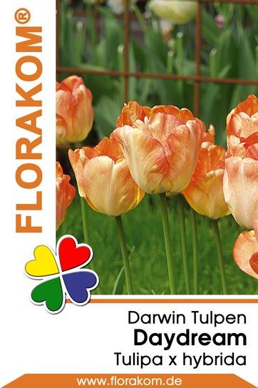 Darwin Tulpen Daydream