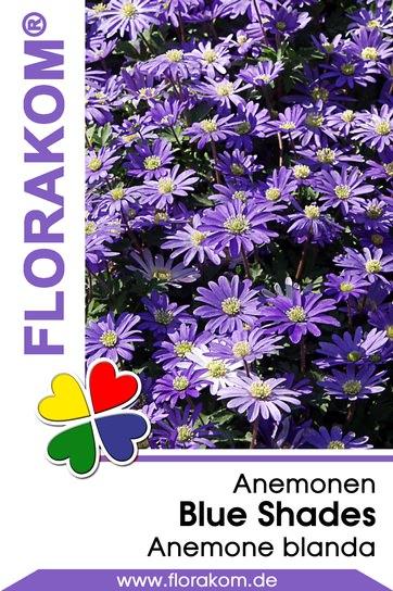 Anemonen blanda Blue Shades Blau