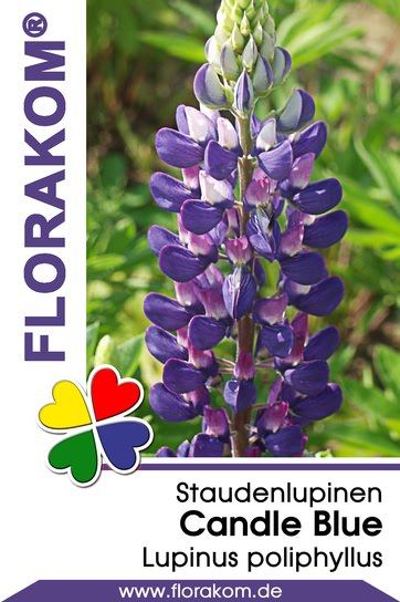 Lupinen Candle Blue