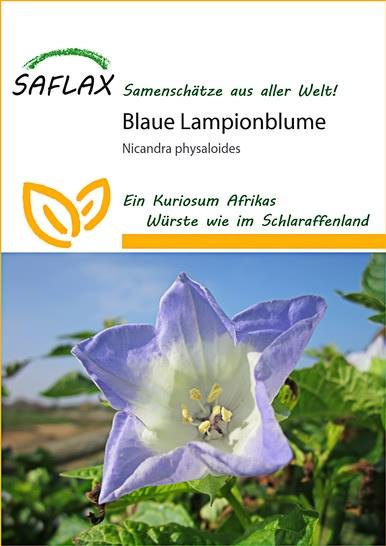 exotische blumensamen blaue lampionblume florakom. Black Bedroom Furniture Sets. Home Design Ideas