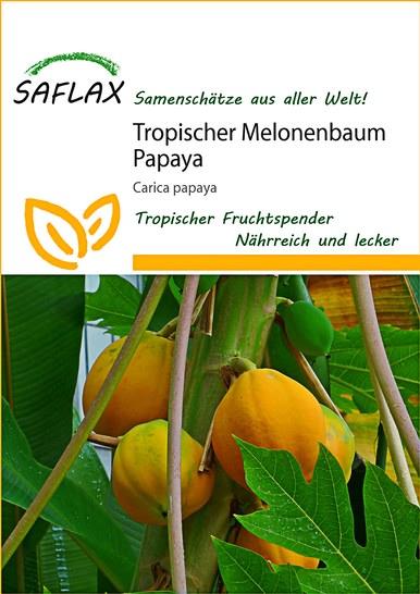 <hr>Tropischer Melonenbaum Papaya <hr>Samen<hr>