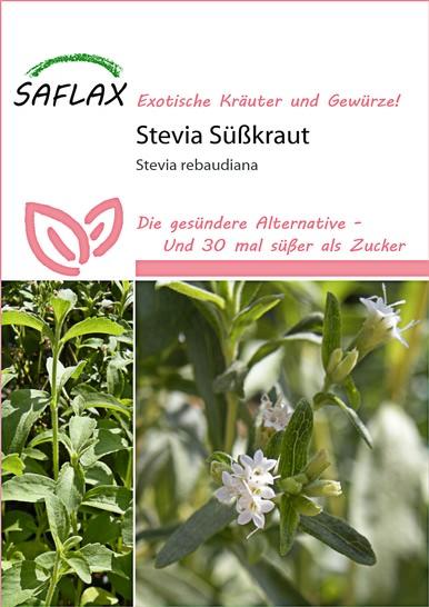 Stevia Süßkraut