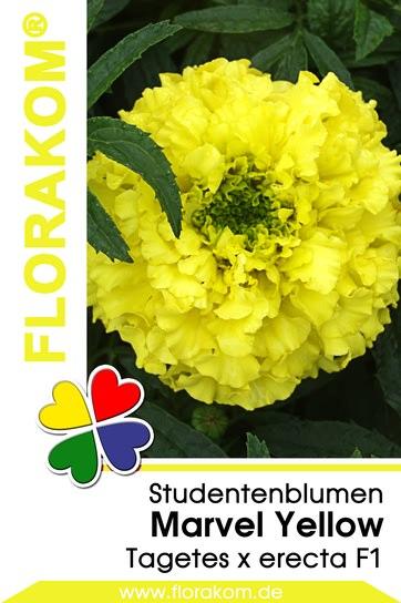 studentenblumensamen tagetes marvel yellow florakom. Black Bedroom Furniture Sets. Home Design Ideas