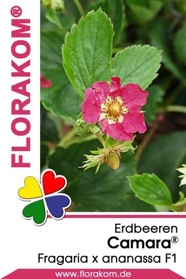 <hr>Erdbeeren Camara® <hr>Samen<hr>