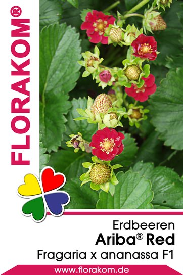 <hr>Erdbeeren Ariba® Red <hr>Samen<hr>
