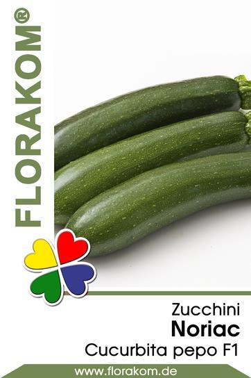 Zucchini Noriac