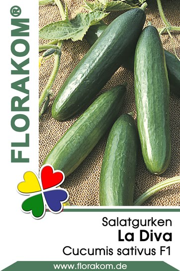 Salatgurken La Diva