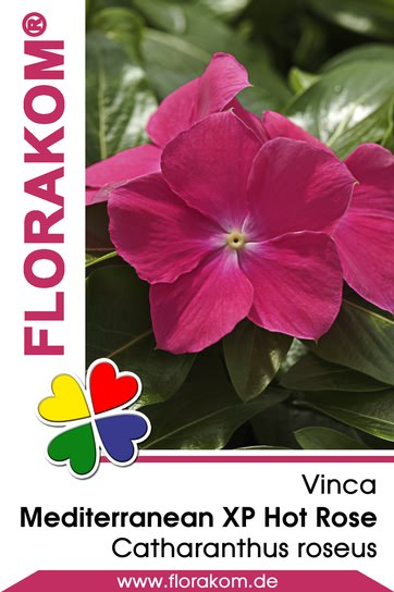 Vinca Mediterranean XP Hot Rose