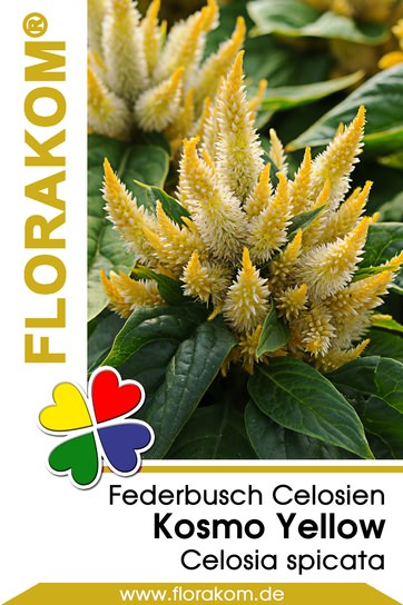 Federbusch Kosmo Yellow - Celosien