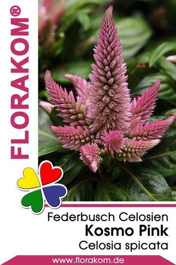 Federbusch Kosmo Pink - Celosien