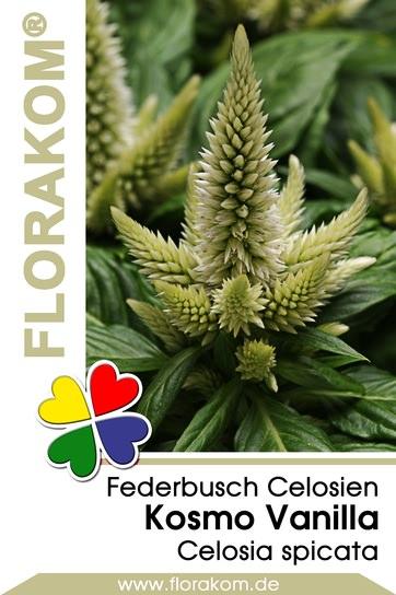 <hr>Federbusch Kosmo Vanilla - Celosien <hr>Samen<hr>