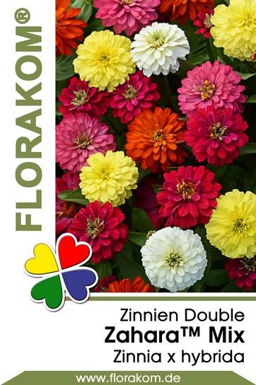 Zinnien Zahara™ Double Mix