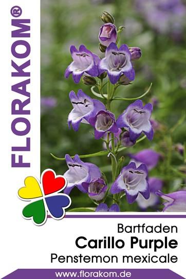 Bartfaden Carillo Purple