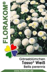 Gänseblümchen Tasso® Weiß
