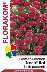 Gänseblümchen Tasso® Rot