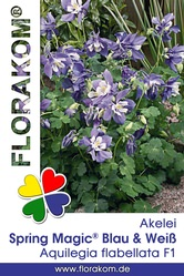 Akelei Spring Magic® Blau & Weiß Samen