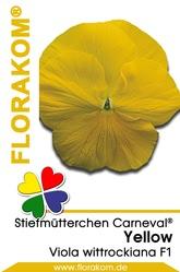 Stiefmütterchen Carneval® Yellow