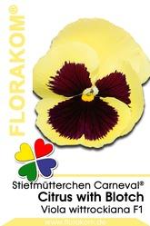 Stiefmütterchen Carneval® Citrus with Blotch