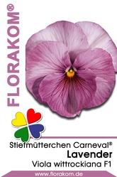 Stiefmütterchen Carneval® Lavender