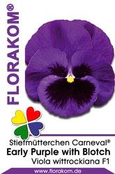 Stiefmütterchen Carneval® Early Purple with Blotch