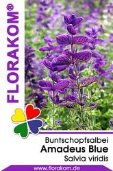 Buntschopfsalbei Amadeus Blue