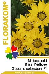 Mittagsgold Kiss Yellow - Gazanien