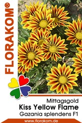 Mittagsgold Kiss Yellow Flame - Gazanien