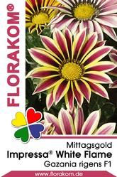 Mittagsgold Impressa® White Flame - Gazanien